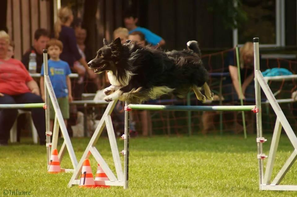 agility-sprung