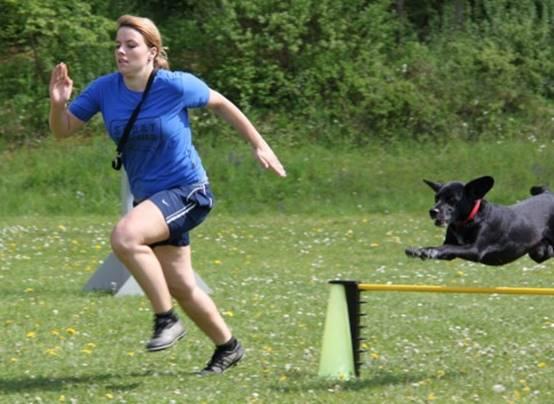 turnierhunde-vierkampf-hindernislauf