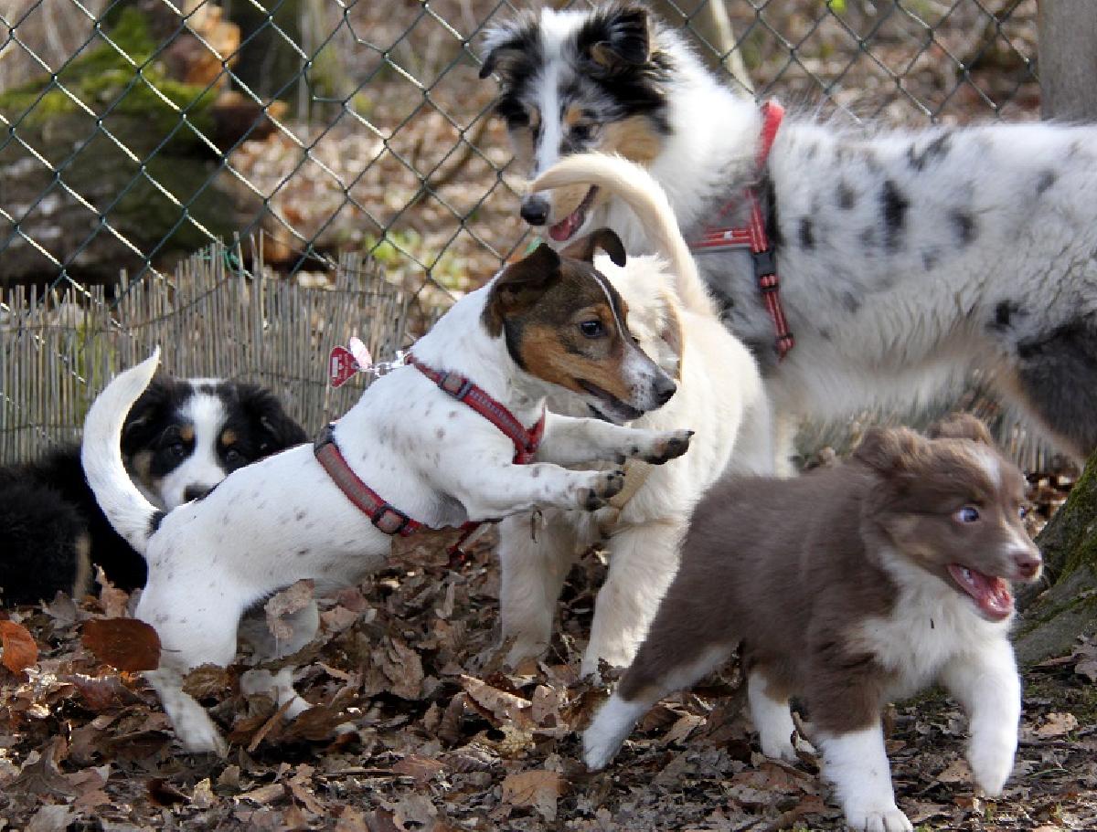 Welpen- und Junghunde