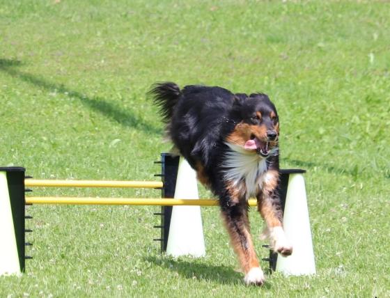 turnierhunde-gruppe